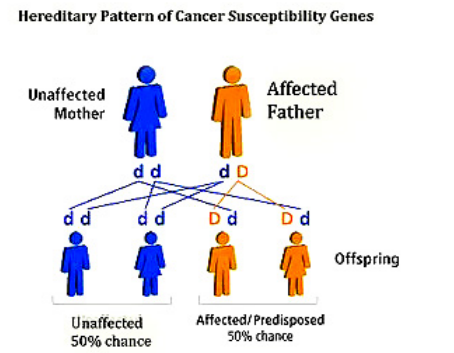 Hereditary Pattern of cancer genes shows how cancer can hereditary spread